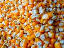 Graines de maïs Photographie stock libre de droits