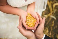 Graines de maïs dans des mains Images libres de droits
