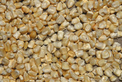 Graines de maïs Photos stock
