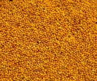 Graines de moutarde Images stock