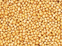 Graines de moutarde photographie stock