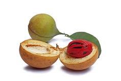 Graines de noix de muscade du Kerala, Inde Image stock