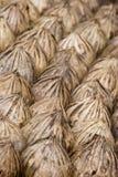 Graines de palmier Photographie stock
