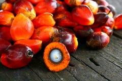 Graines de palmier à huile Photos stock