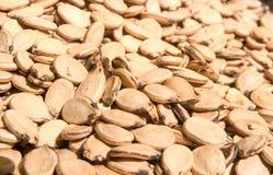 Graines de pastèque Image libre de droits