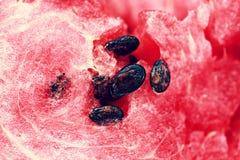 Graines de pastèque Photos libres de droits