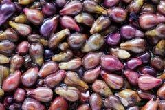 Graines de raisins Photo libre de droits