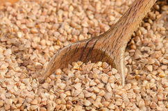 Graines de sarrasin Photos stock