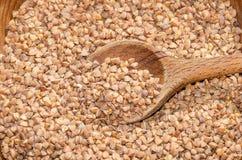 Graines de sarrasin Photo stock