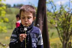 Graines de soufflement de pissenlit dans le vent Photographie stock