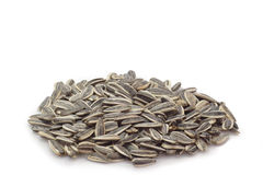 Graines de tournesol Image stock