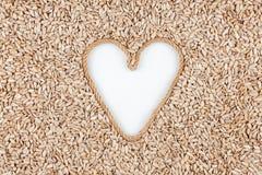 Graines de tournesol et une corde sous forme de coeur avec un endroit pour des concepteurs Image libre de droits