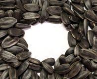 Graines de tournesol noires Photos libres de droits
