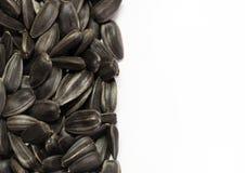 Graines de tournesol noires Photographie stock libre de droits