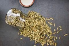 Graines de tournesol sèches Photo libre de droits