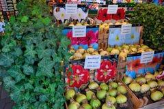 Graines de tulipe d'Amsterdam à acheter Images stock