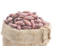 Graines des haricots Image stock