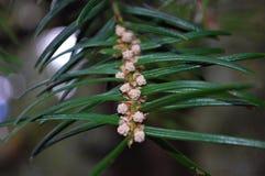 Graines et combinaison de feuille présentant la beauté des arbres photos stock