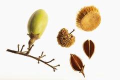 Graines et cosses d'automne Image stock