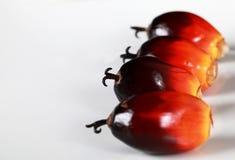 Graines fraîches de palmier à huile Photographie stock libre de droits