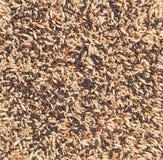 Graines mélangées photo libre de droits