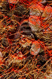 Graines minuscules de plan rapproché Image stock