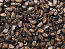 Graines noires de melon Photographie stock libre de droits