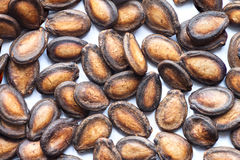 Graines noires de melon Images stock