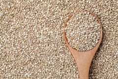 Graines organiques de quinoa Image stock