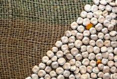 Graines sèches Images stock