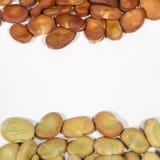 Graines sèches de la fève de différentes couleurs Photos libres de droits