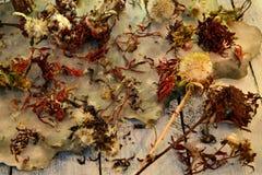 Graines sèches des fleurs d'aster et de marguerite avec les pilons et le papier grunge sur la table image libre de droits