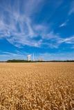 grainfield ισχύς φυτών Στοκ φωτογραφίες με δικαίωμα ελεύθερης χρήσης