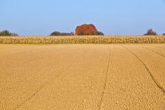 grainfield падения Стоковые Фото