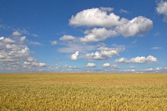 Grainfield Royalty Free Stock Images