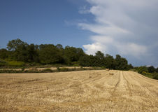 Grainfield Royalty Free Stock Photography