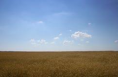 grainfield Стоковая Фотография RF