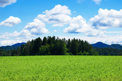 Grainfield con el cielo y las montañas Fotografía de archivo libre de regalías