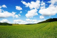 Grainfield con el cielo y las montañas Imágenes de archivo libres de regalías