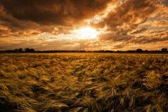 Grainfield durante puesta del sol Fotos de archivo