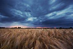 Grainfield en bewolkte hemel Royalty-vrije Stock Afbeelding