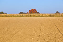 Grainfield in fall Stock Photos