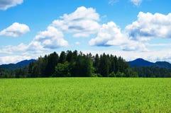 Grainfield mit Himmel und Bergen Lizenzfreie Stockfotografie