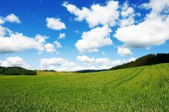 Grainfield mit Himmel und Bergen lizenzfreie stockbilder