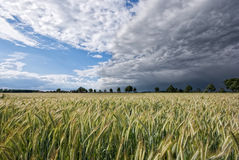 Grainfield and storm. The picture shows a wheat field and a gathering storm stock image