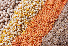 Grains. Colourful grains are together in forms of stripe Stock Photo
