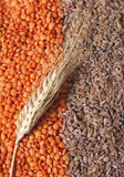 Grains. Some grains with a wheat spica , ear of grain Royalty Free Stock Image
