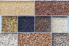Grains And Seeds Royalty Free Stock Photo