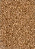 Grains background. Stock Images