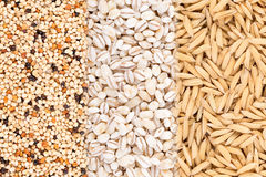 Grains background. food background Royalty Free Stock Photography